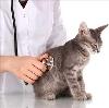 Ветеринарные клиники в Новосиле